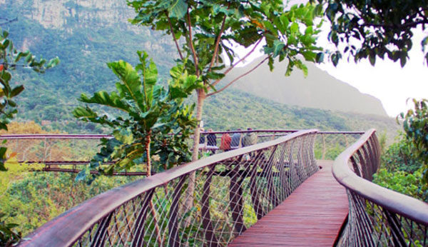 Kirstenbosch-bridge-