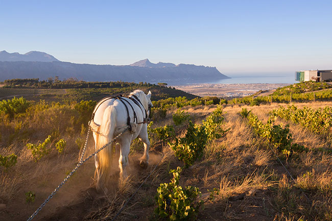 Waterkloof-Estate-with-horse-and-view-Jumbo2
