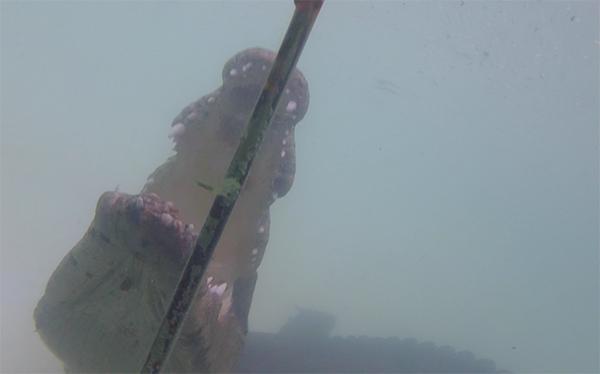 croc-under-water-