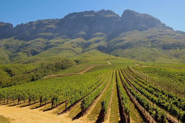 TOKARA-Stellenbosch-Vineyards