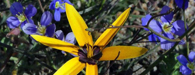 darling-wildflower-flower