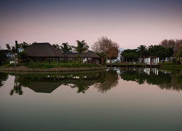 stellenbosch vineyards