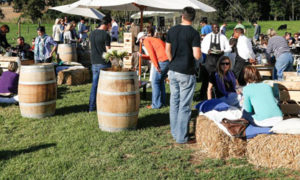 usana farm festival