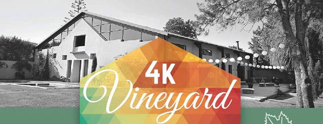 4K VINEYARD FUN WALK/RUN AND CHRISTMAS MARKET