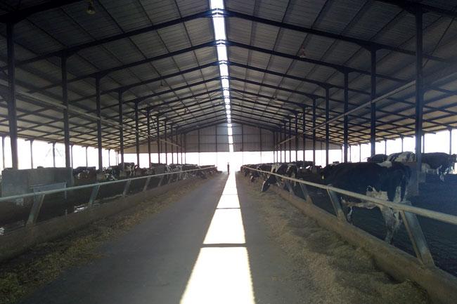 Pure goodness at Fair Cape Dairy Farm