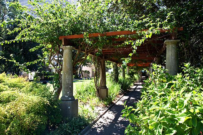 Company Gardens G v Nelson