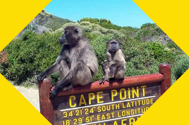 Cape Town to Cape Point or Franschhoek for R99