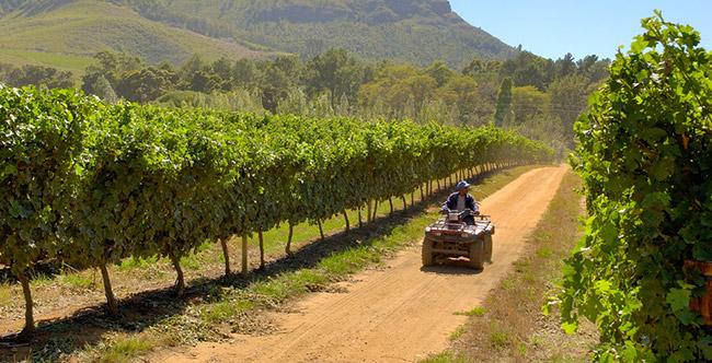 Tokara vineyards.