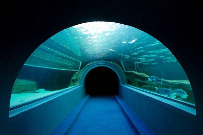 I&J Ocean Tunnel.