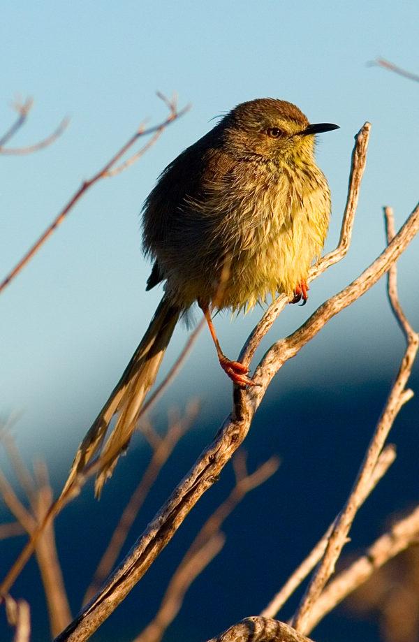 Breedekloof birdwatching