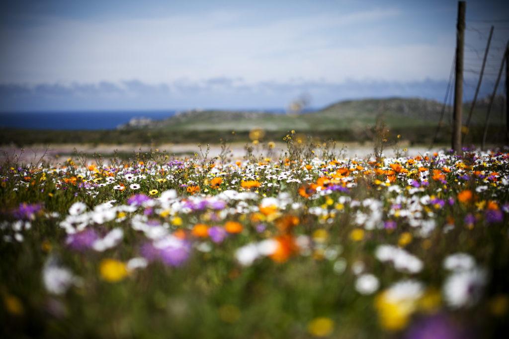 Spring flowers West Coast