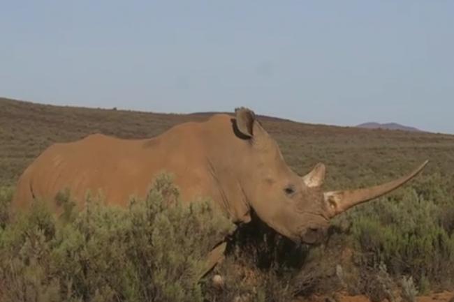 Adam Spires Rhino
