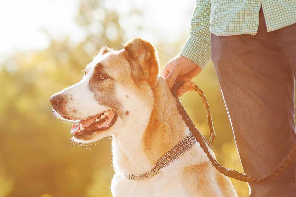 Vetsol Doggie Walk