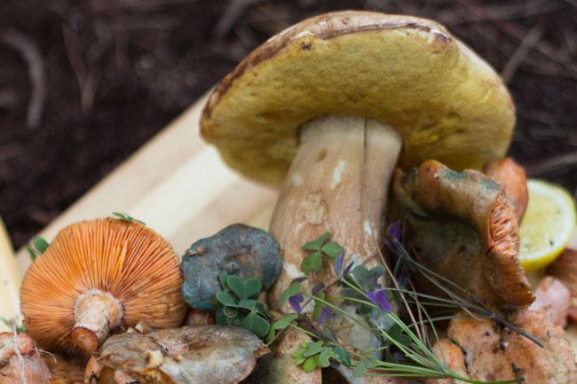 Mushroom foraging Cape Town