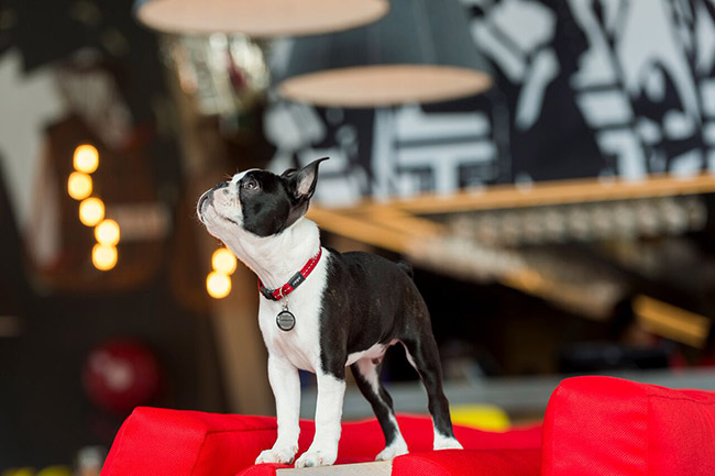 Radisson RED offers pet-friendly rooms.