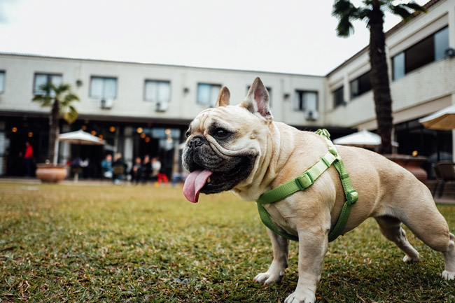 5 Pet friendly eateries in Cape Town