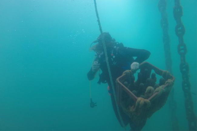 drifter underwater beer