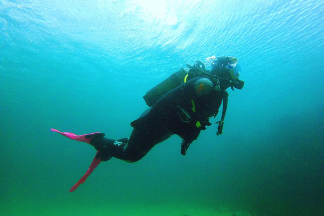 WATCH: Scuba in the Cape Town Kelp Forest