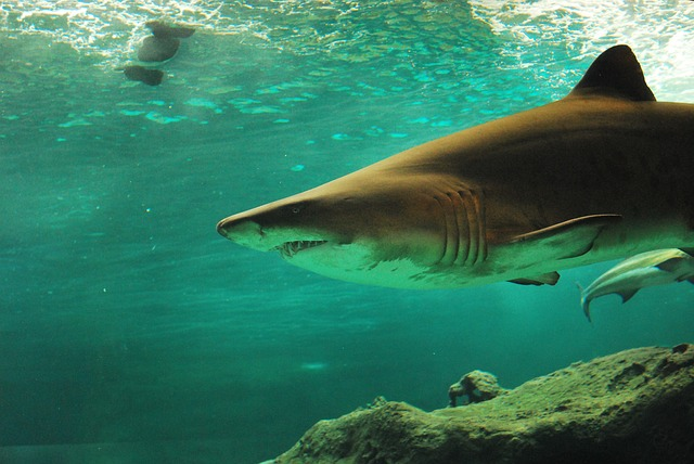 WATCH: Drones used to spot sharks in Cape Town