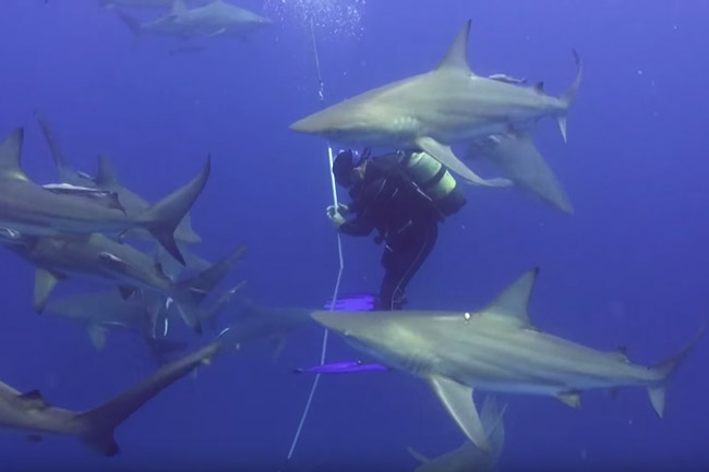 WATCH: Diving with sharks in South Africa