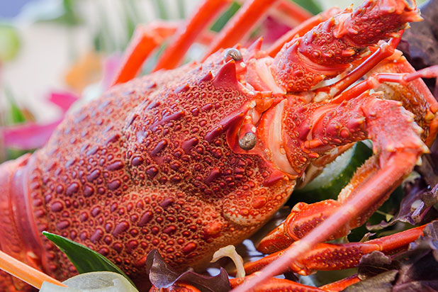 """Crayfish"" season kicks off. You can fish for it, but not buy it."