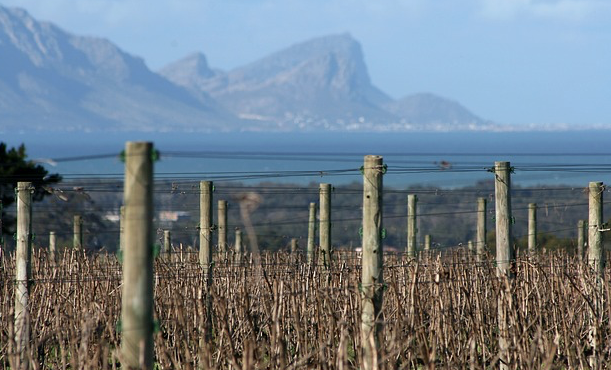 Stellenbosch Municipality will now use its own available water sources