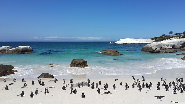 Unmatched beauty - Cape Town