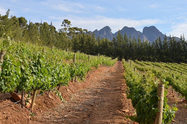 Franschoek farmers have run out of water