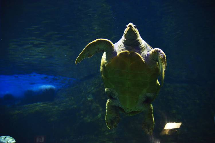 Yoshi the turtle's journey going swimmingly