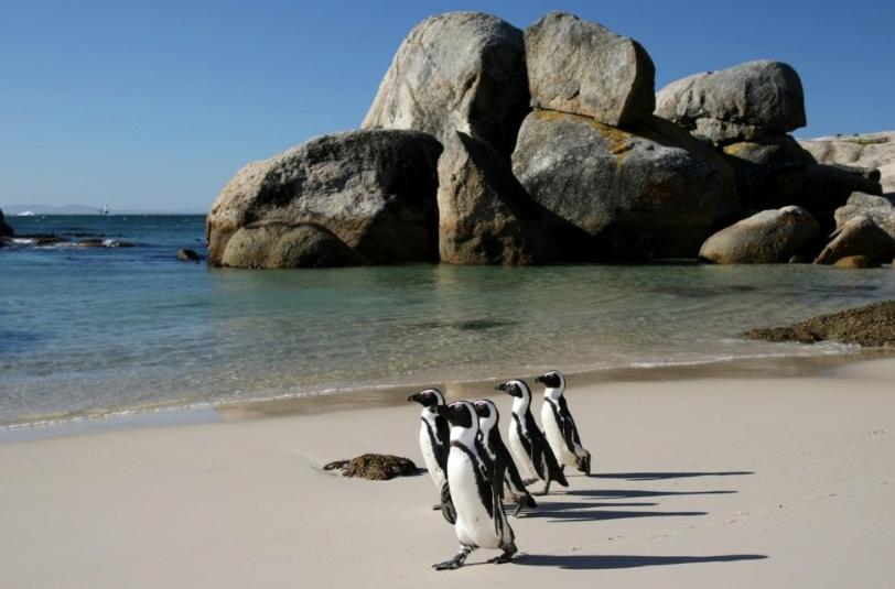 Boulders Beach penguins catch bird flu