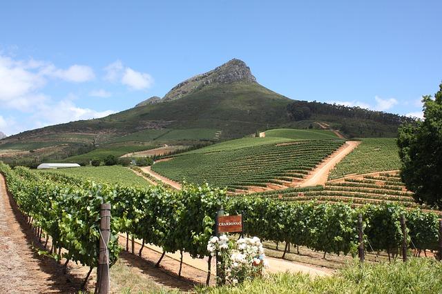 Western Cape's wine tourism grew 16%