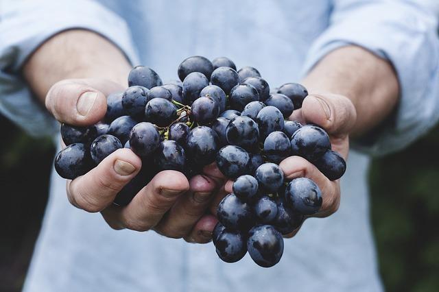 Cape records smallest wine grape crops in 13 years