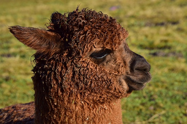 Alpaca Loom packs a day full of fun