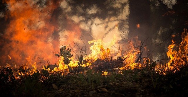 Table Mountain 'arsonist' may be unfit to appear in court