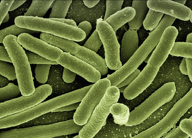 Listeriosis death toll on the rise
