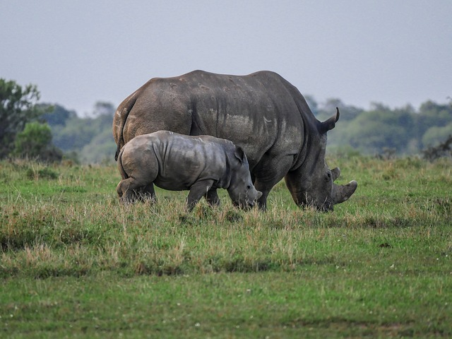 Aquila assist in orphaned rhino rescue