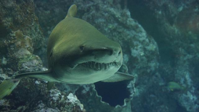 Shark attacks paddle in Plettenberg Bay