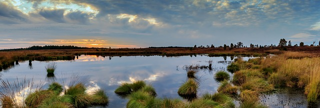 Artificial wetland in Paarl to help purify Berg River