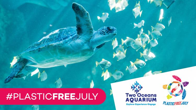 Plastic Free July at Two Oceans Aquarium