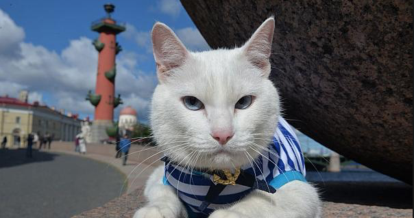 Achilles the Cat to predict World Cup wins