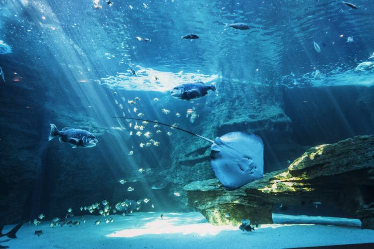 After Dark music sessions at Two Oceans Aquarium