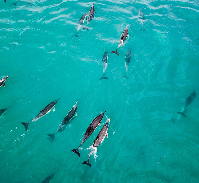 PICTURES: Dolphins cascade over Camps Bay waters