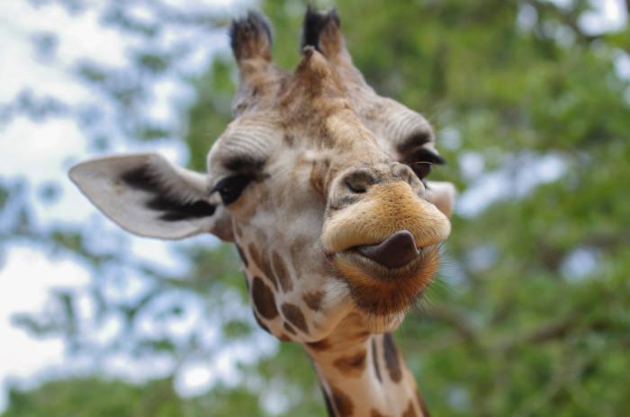 5 unique animal experiences in Cape Town