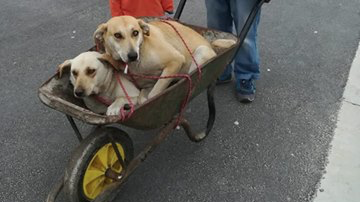 Father and son go the extra mile for their dogs