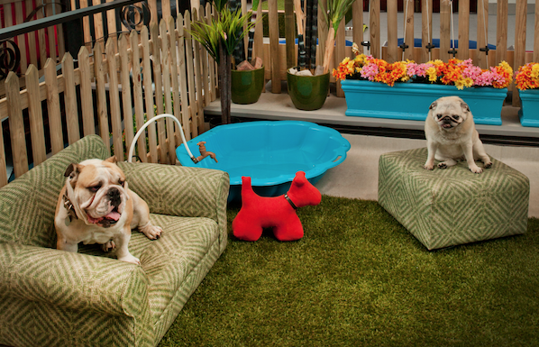 World's biggest dog hotel opens in Cape Town
