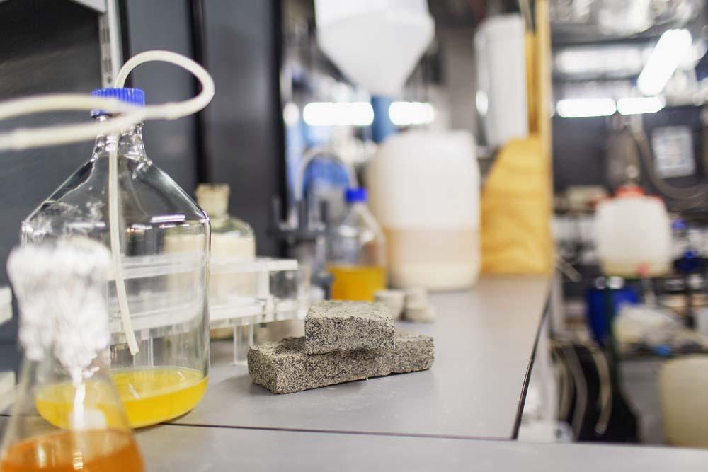 Capetonian student creates world's first bio-brick