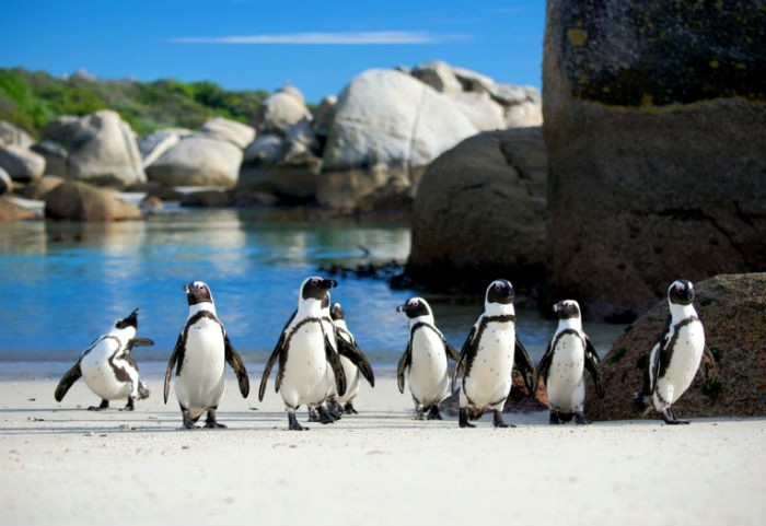 Cape Point and Boulders Beach lower rates for locals