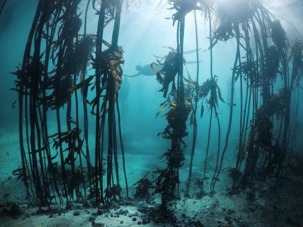 7 New species discovered in Cape kelp forests