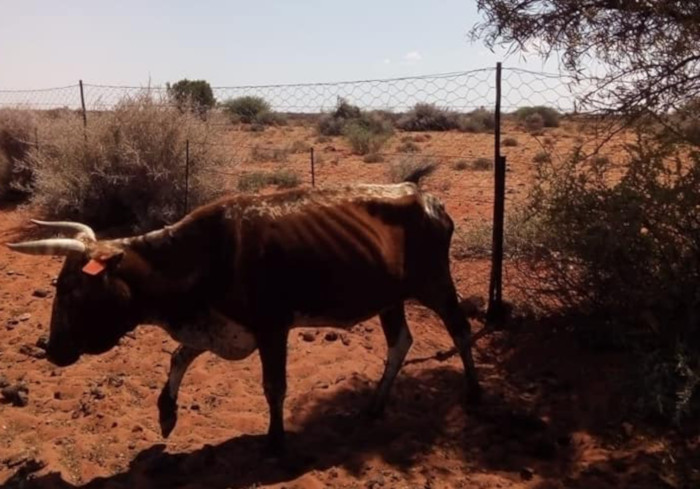 PICTURES: Drought stricken Karoo