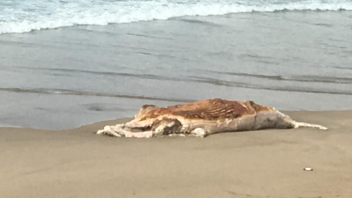 Whale carcass washes up on Knysna beach